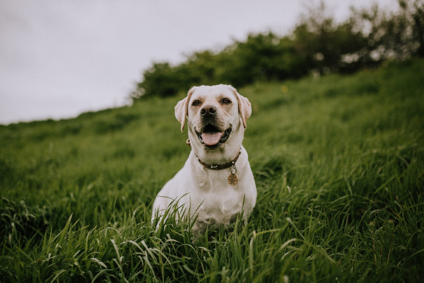 Happy dog sitting in field of grass