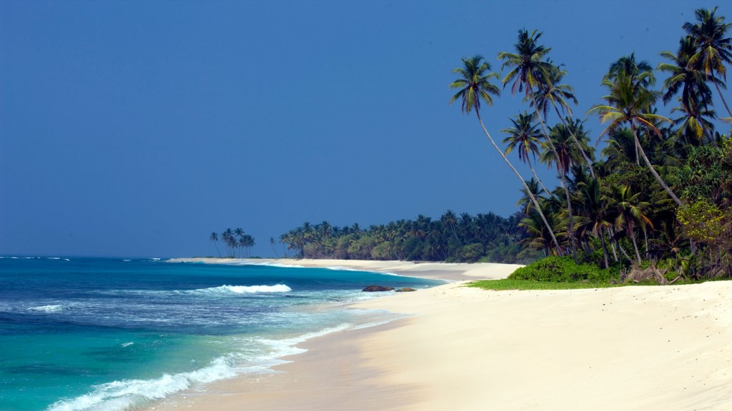 Sri Lankan beach with palm trees